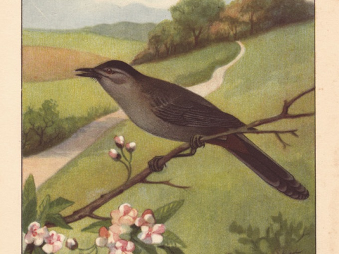 1926 CATBIRD Book-Plate Illustration in Full Color