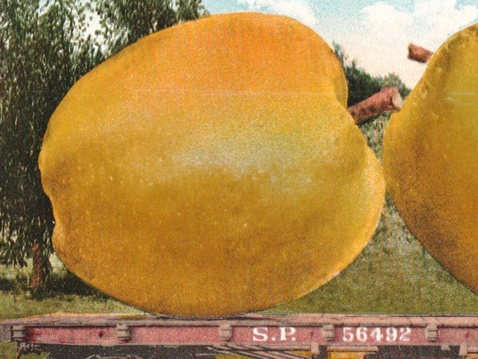 1910 Exaggeration Postcard — A Carload of Bellflower Apples