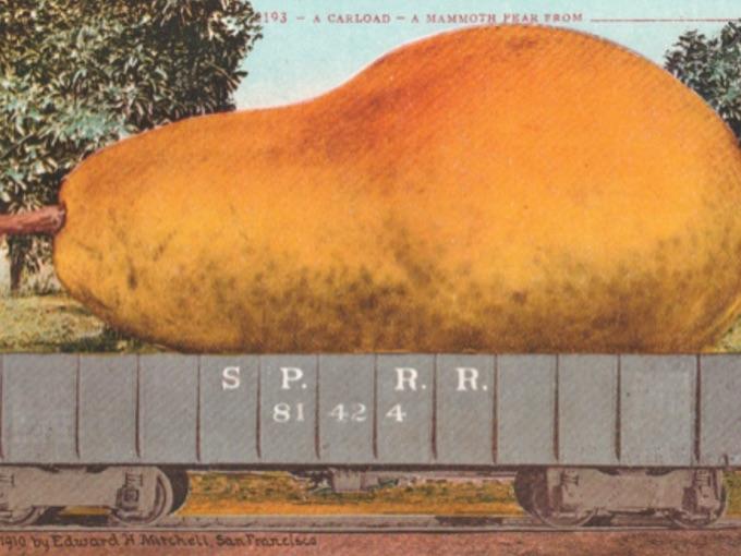 1910 Exaggeration Postcard — A Mammoth Pear