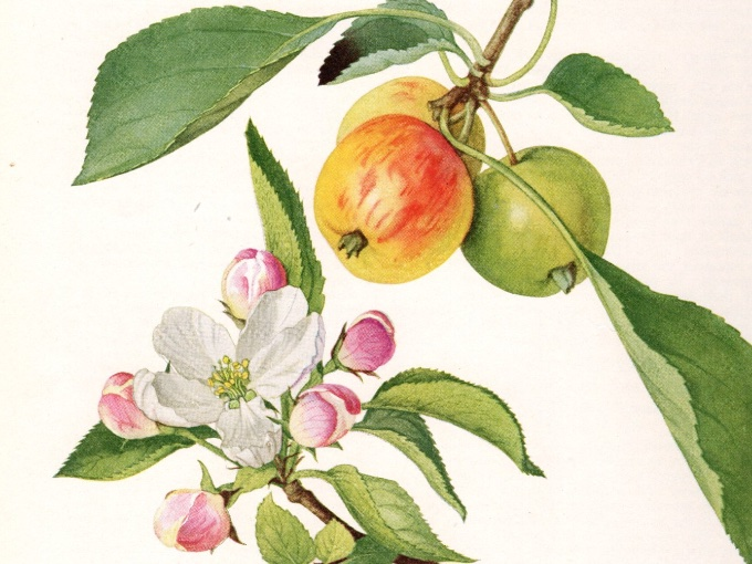 Browse through lithographs and other prints.